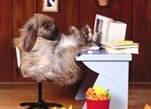 conigli alimentazione,conigli razze,malattie conigli,conigli riproduzione,conigli accoppiamento,conigli gestazione,conigli video,conigli nani razze